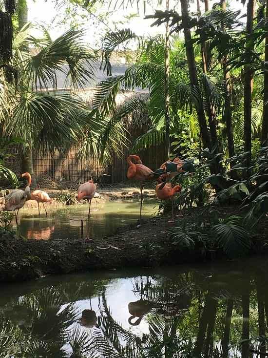 El-Pantanal-Guayaquil-Caliente