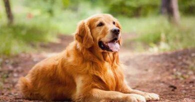 Los nombres de perro más originales