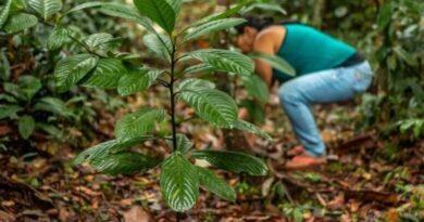 1000 árboles la contribución de la marca Nosotras para la reforestación del Amazonas
