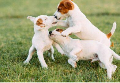 Por qué nos lamen realmente los perros, según los expertos