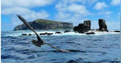 Arco de Darwin, en Galápagos, colapsó esta mañana por erosión natural